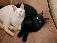 Onyx and Allie Bonded Pair!'s story Our names are Onyx
