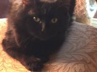 Onyx is a beautiful year old mama who was dumped in the