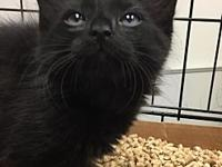 Onyx's story Onyx is a fluffy playful fireball!