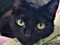 Onyx's story Meet Onyx, the stunning all black cat who