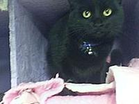 Onyx's story Hello my name is Onyx. I am 4 years old,