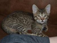 Onyx's story Hi! :) I am available, but am currently in