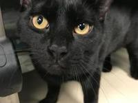 Onyx's story Meet Onyx! This handsome young boy is