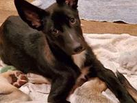 My story Onyx is a 3 month old female Husky/Shepherd