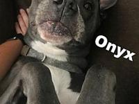 Onyx's story Please understand we must conduct home
