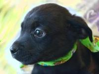 Onyx's story I came to the Kentucky Humane Society from