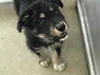 ONYX's story Please contact Jenny Cope