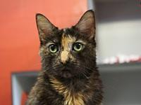 Opal's story Opal is a friendly tortoiseshell cat who