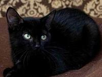 Opal's story Adoption fee for cats is $65.00 which