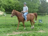 Open Horse Show in Spring Green, WI - September 29th -