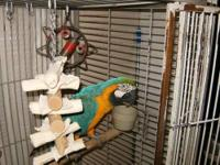 Four Feather's Parrot Sanctuary are now taking in