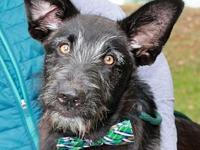 Opie's story To be considered for adopting a dog from