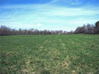 Great hay field. Ideal for small farm, horses, a home