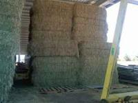 Premium orchard grass horse hay. Barn stored, no rain.