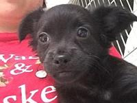 Oregeno's story At Wags and Whisker's Pet Rescue: