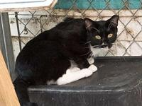 Oreo 2 (feral)'s story Available through Humane Society