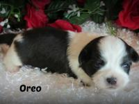 Hi! My name is Oreo. Let me tell you a little about