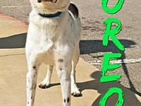 Oreo's story Oreo is a 3 year old male Border Collie