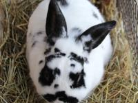 Hello.  My name is Oreo.  I am an adult male rabbit. I