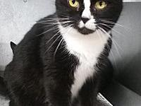 Oreo's story Oreo lived in filth in a hoarding house