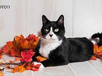 Oreo's story Oreo is a sweet boy who like to be with