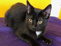 OREO's story OREO Oreo is a sweet little kitten that is