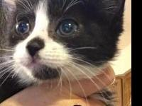 Oreo's story Busy little guy who enjoys humans but