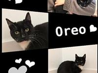 Oreo's story Oreo likes to be petted & held. He is a an