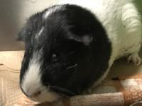 Meet OREO and TOFFEE! - We are currently located at the