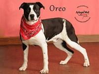 Oreo's story Hi friends! I'm Oreo a very cute pup here