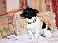 OREO's story Oreo is a 12 pound, year and half old,