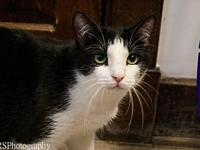 Oreo's story My name is Oreo and I am a 2 year old,