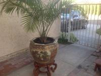 Oriental ceramic urn with stand and palm tree. We're