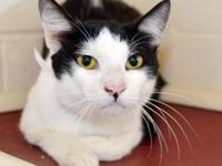 Orion's story - Orion is a laid back looker that is