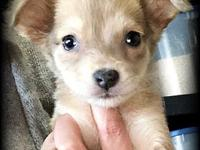 Orphan Puppies - Ollie's story Please visit our website