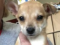 Orphan Puppies - Oliver's story Please visit our