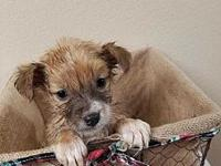 Orphan Puppies - Omelia's story Please visit our