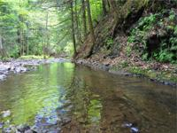 WATERFRONT borders 622 acres STATE FOREST: 5 acres,