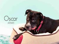 OSCAR's story Roommate wanted! Interested applicants