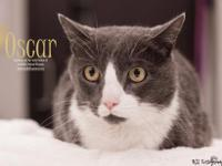 Hi, Im Oscar! I recently came here to Foothills Animal