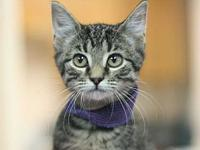 Oscar's story Adoption fee for cats is $65.00 which
