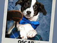 OSCAR's story **More information coming soon on