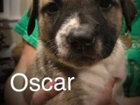 Meet Baby Oscar.  We rescued Frieda who is Oscars mom