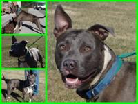 Beautiful blue Oscar is an energetic and enthusiastic