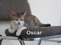 Oscar's story This is Oscar, and he is about 6 months
