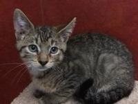 Oslo's story Hallo. I'm a cute brown tabby kitten