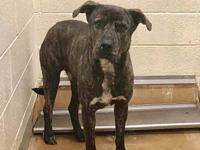 Oso A491679 @ Moreno Valley's story *THIS DOG IS NOT IN
