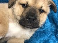 Oso's story Meet Oso, this little chubby pup is the