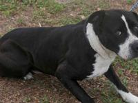 4/18 ~ Please share Otis! He is now available for