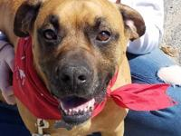 Young Otis is a handsome, gentle boy who would love to